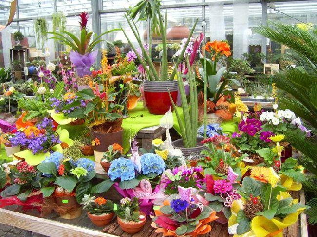 dekorierte Blühpflanzen